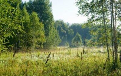 Montaż instalacji fotowoltaicznej w pobliżu lasu – czy ma sens?